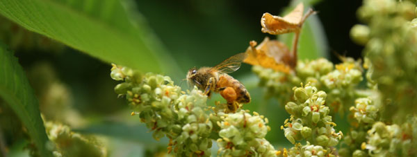 Helpful links about honey and beekeeping.